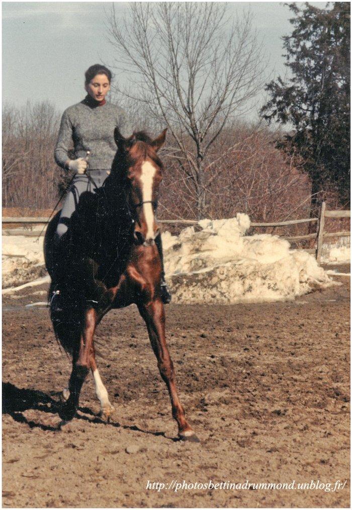 cheval8 copie