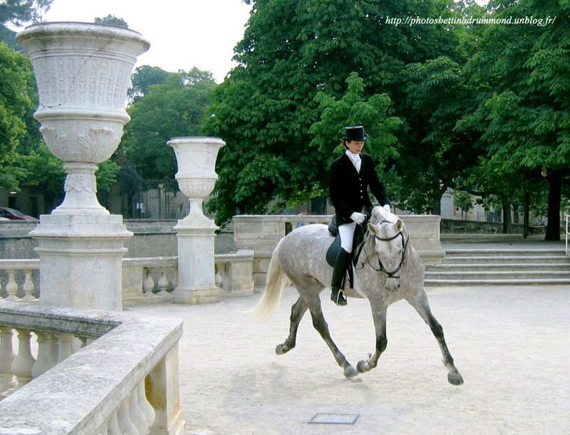 Kiko Psl Nimes 2004 cheval personel copie